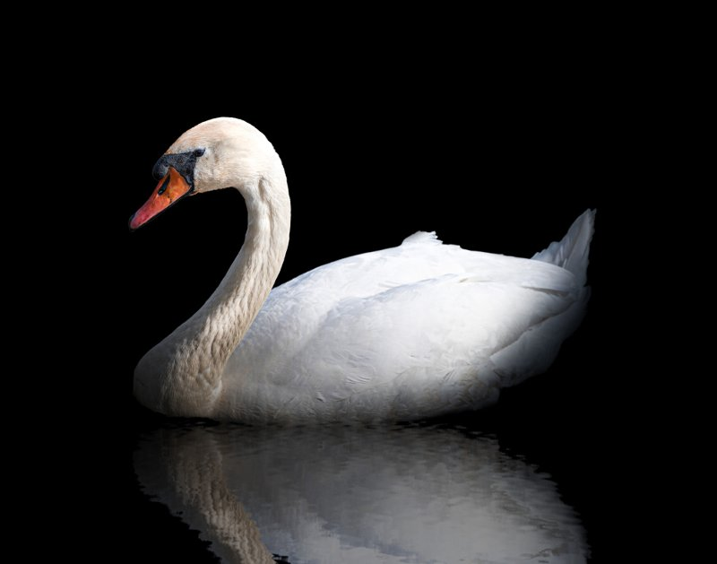 Beauty and Swan